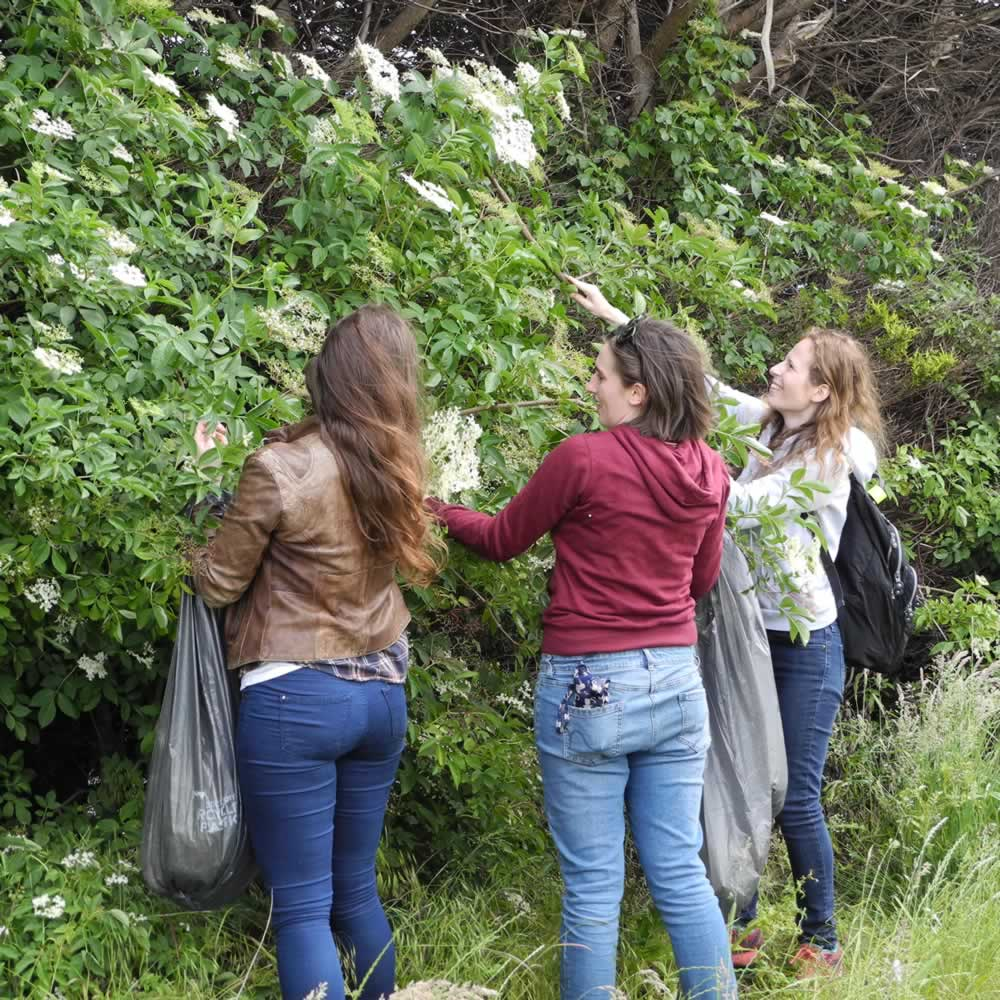 Some of our York Demijohnnies picking elderflower near Wetherby in West Yorkshire in 2019