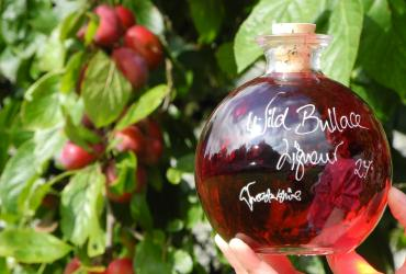 Wild Bullace Liqueur in a Sfera 500ml bottle